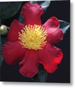 Cookie Cutter Camellia Metal Print