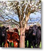 Cool Cows Metal Print