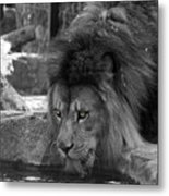 Cool Drink Of Water  Black And White  T O C Metal Print