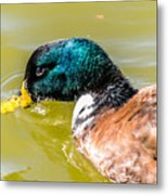 Cool Off The Bill Metal Print