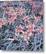 Cool Sunset Field Of Tiger Lillies Metal Print