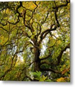 Coole Park Tree Galway Ireland Metal Print