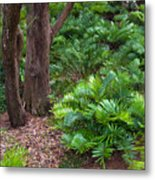 Coontie  Florida Arrowroot Or Indian Breadroot Metal Print