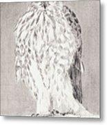 Coopers Hawk Metal Print