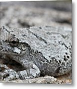 Cope's Gray Tree Frog #5 Metal Print