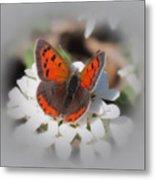 Copper Glow - Butterfly Metal Print