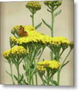 Copper On Yellow - Butterfly - Vignette 2 Metal Print
