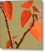 Copper Plant Metal Print