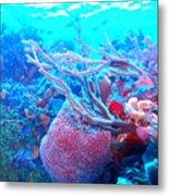 Coral Candy Metal Print