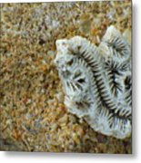 Coral Closeup Metal Print