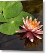 Coral Lily 6 Metal Print