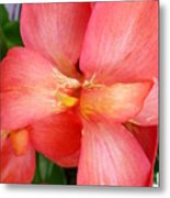 Coral Orchid Metal Print