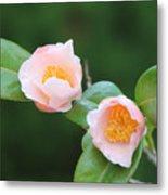 Coral Camellia 2 Metal Print