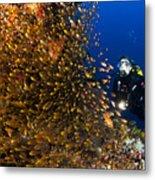 Coral Reef And Diver  Metal Print