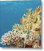 Coral Reef Eco System Metal Print