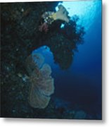 Coral Reef Wall With Seafan And Hard Metal Print