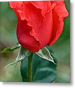 Coral Rosebud At Pilgrim Place In Claremont-california   Metal Print