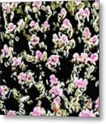 Coral Spawning  Metal Print by Lanjee Chee