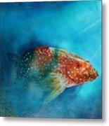 Coral Trout Metal Print