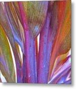 Cordyline Rainbow Leaves Metal Print