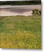 Corepsis Blooming At The Quanah Parker Lake Metal Print