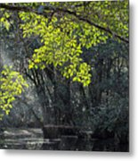 Corkscrew Swamp - In The Autumn Metal Print