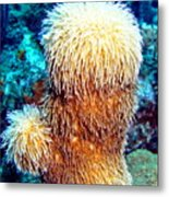 Corky Sea Finger Coral - The Muppet Of The Deep Metal Print