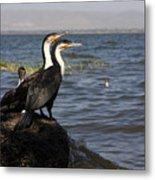 Great Rift Cormorants Metal Print