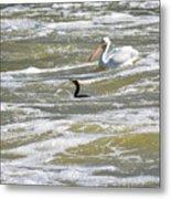 Cormorant And Pelican Metal Print