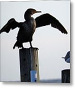 Cormorant And Seagull Metal Print