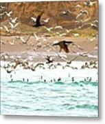 Cormorant Flight In Frenzy Metal Print