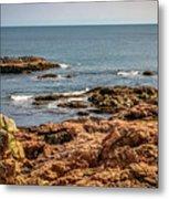 Cormorants And Seagulls Resting Metal Print