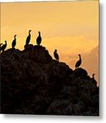 Cormorants On A Rock With Golden Sunset Sky Metal Print