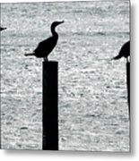 Cormorants Port Jefferson New York Metal Print