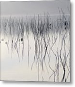 Cormorants Waiting For The Night Metal Print