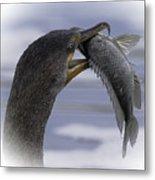 Cormorant's Whopper Dive Catch Metal Print
