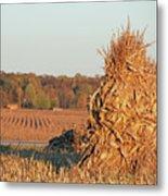 Corn At Harvest Metal Print
