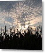 Corn At Sunrise Metal Print