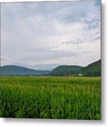Corn Fields, Upstate New York Metal Print