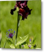 Corn Flower With A Friend Visiting Metal Print
