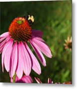 Corn Flower With Bee Metal Print