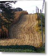 Corn Harvest Metal Print