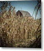 Corn Maze Metal Print