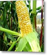 Corn On The Cob Metal Print