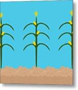 Corn Rows Metal Print