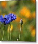 Cornflowers -2- Metal Print by Issabild -