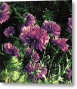 Cornflowers Autumngraphy - Photopainting Light Metal Print