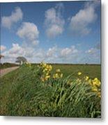 Cornish Daffodil Hedge Metal Print