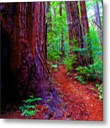 Cosmic Redwood Trail On Mt Tamalpais Metal Print
