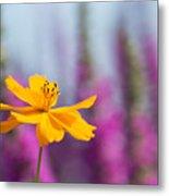 Cosmos Polidor Flower Metal Print